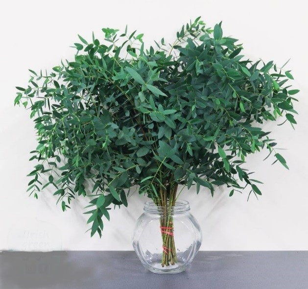 Cultivated Foliage Forest Produce Europe S Leading Supplier Of